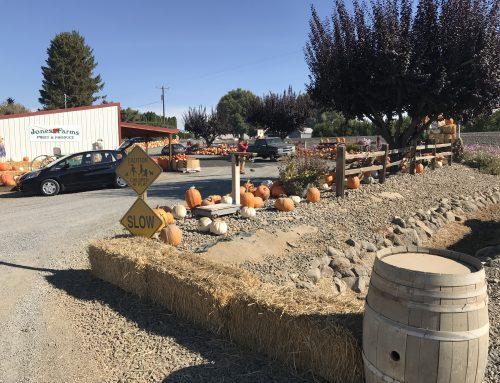 Jones Farms is your Source for Pumpkins!