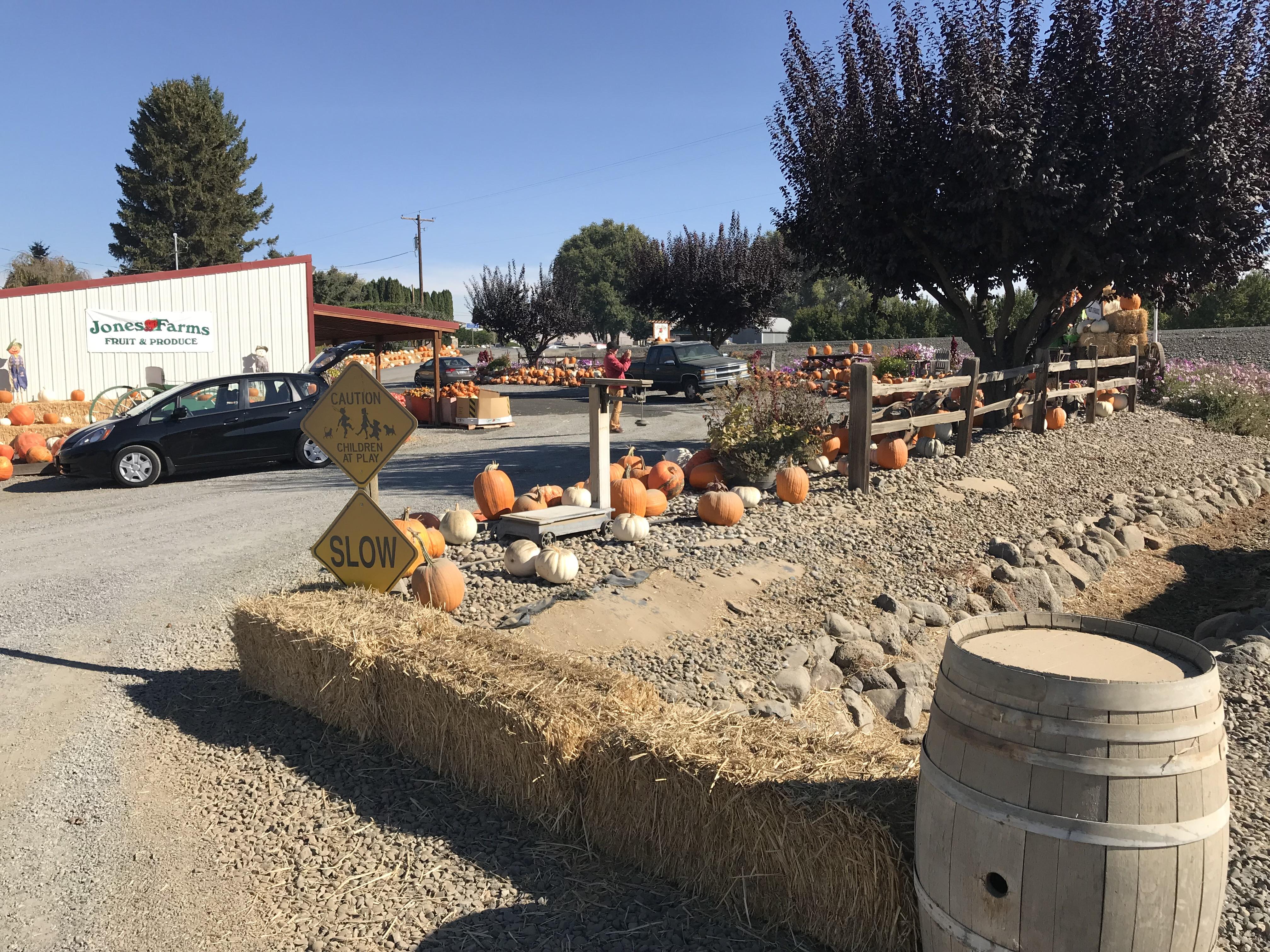 Pumpkin Central
